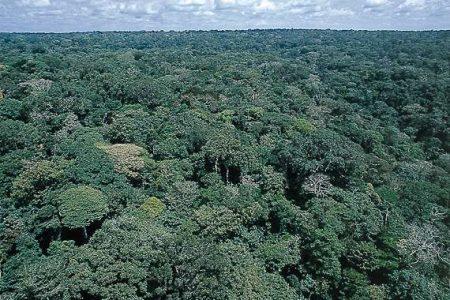 Du biogaz pour préserver les forêts de RDC
