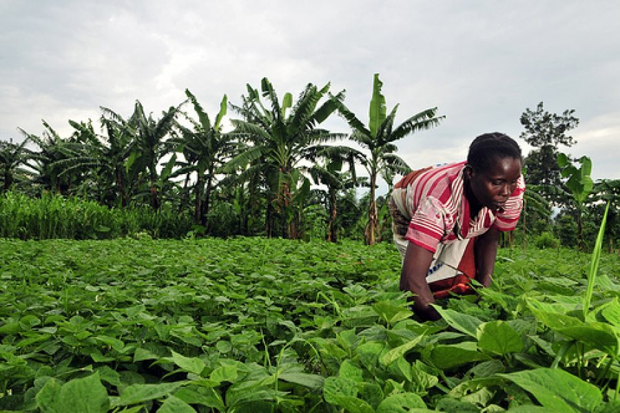 DR Congo : Untapped potential – some data