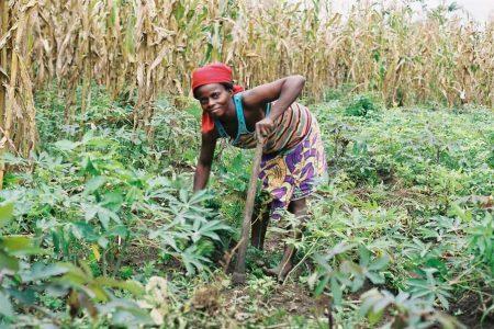 Afrique des Grands Lacs : droit à la terre, droit à la paix
