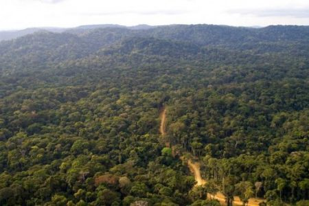 The importance of Congo Basin for global climate & biodiversity