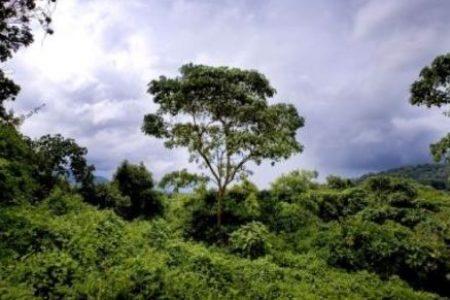RDC : Une réserve naturelle menacée par le pétrole