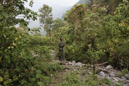 RDC : Le pétrole terrorise le parc national des Virunga
