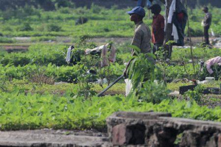 La paysannerie congolaise comme fer de lance de la lutte de libération et du peuple de la RD-Congo